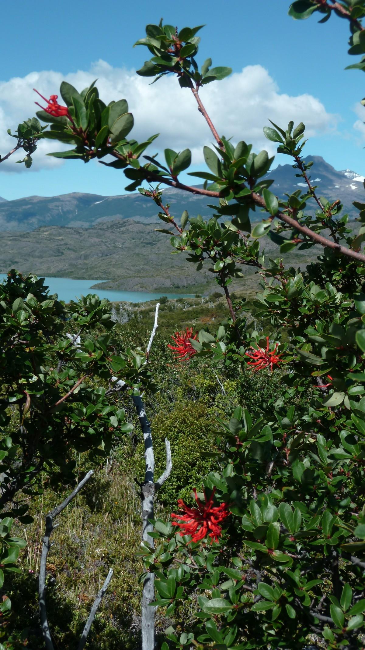 patagonie-torres-del-paine-pehoe2