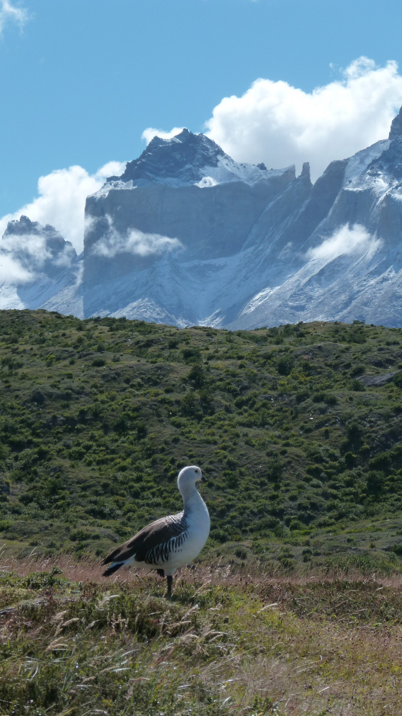 patagonie-torres-del-paine-oie