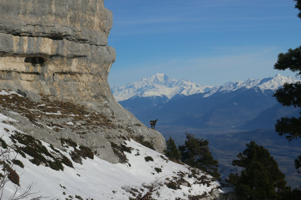mont-granier-chamois