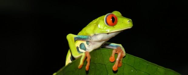 COSTA-RICA : 7 activités Pura vida !