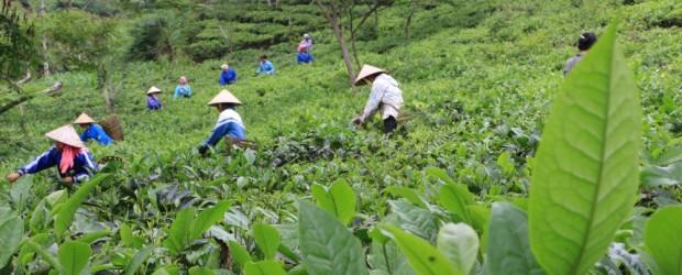 Voyage au Vietnam : du Mont Fansipan à la Baie d'Along