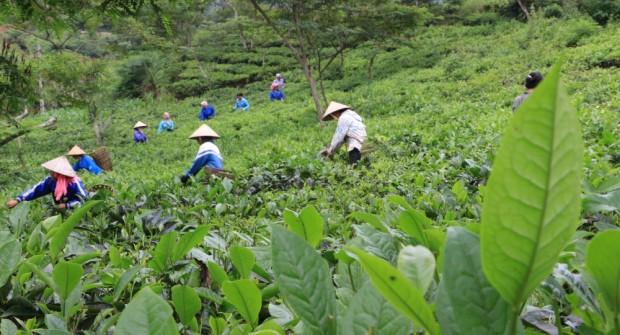 NORD VIETNAM : du Fansipan à la Baie d'Halong