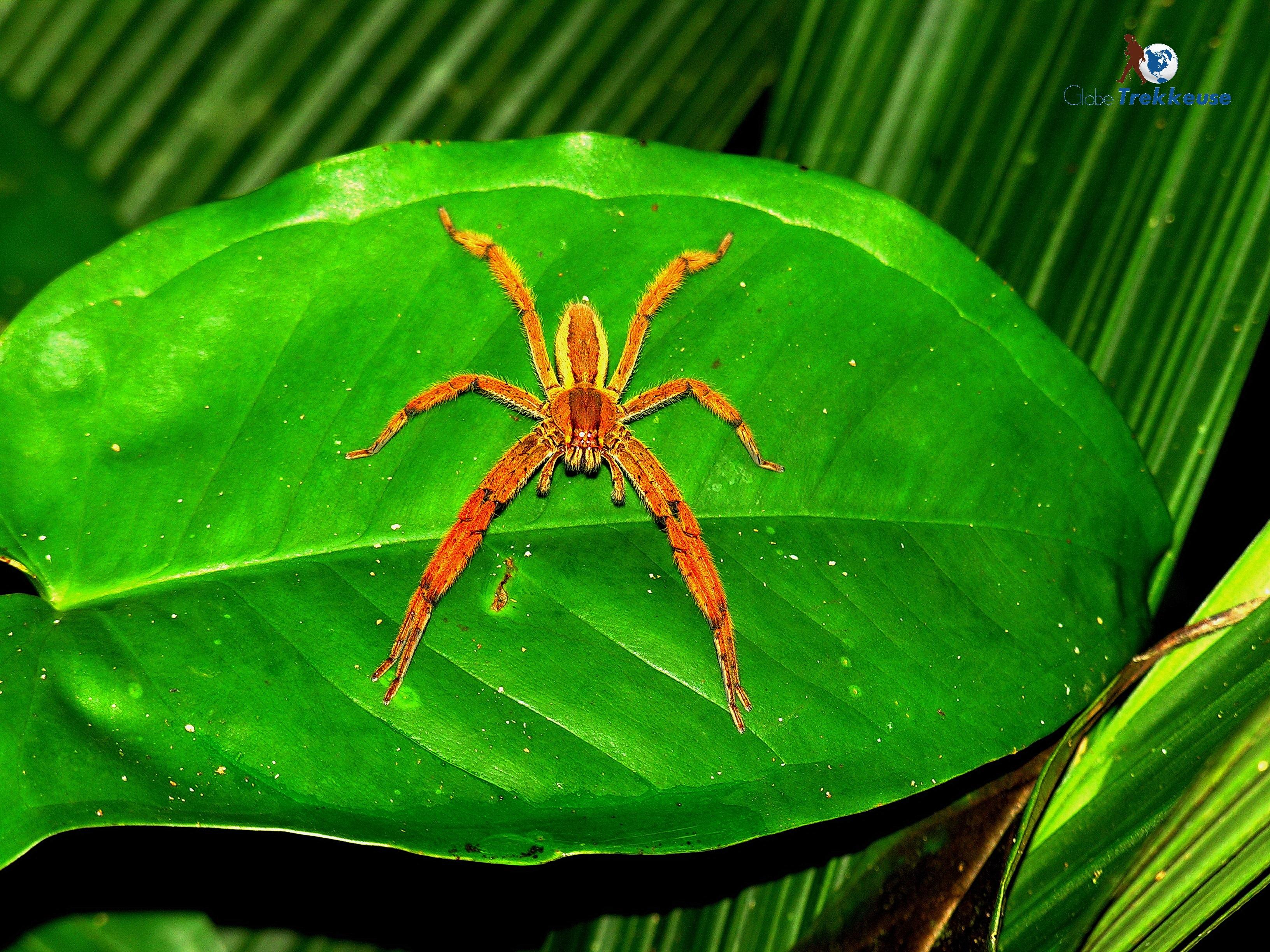 voyage au costa-rica araignee