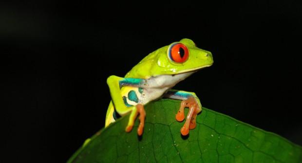Voyage au Costa-Rica : randonnées et activités «Pura Vida»