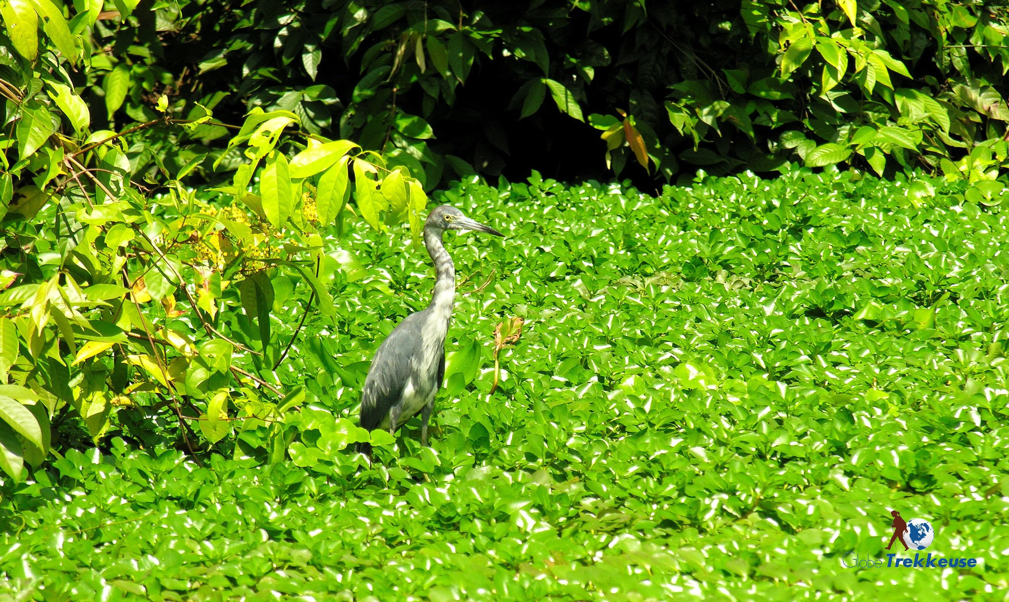 voyage au costa-rica oiseau