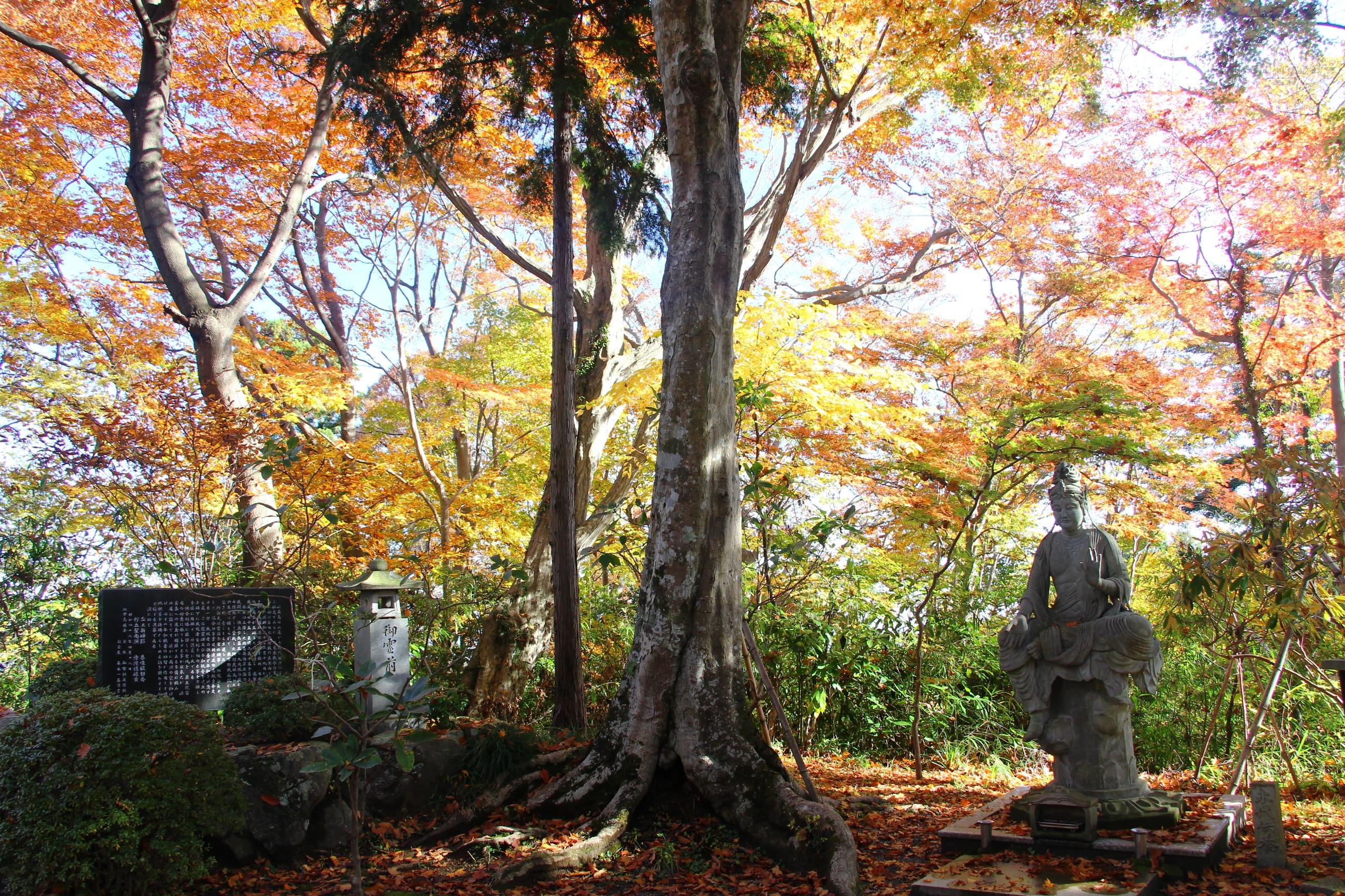 mont takao momiji zen