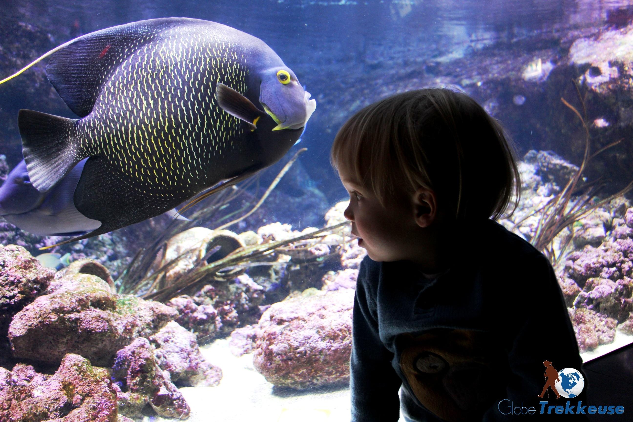 paris en famille cineaqua poisson