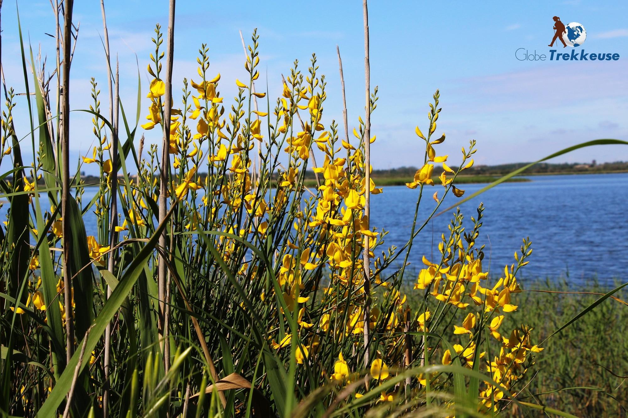 etang de thau reserve bagnas fleurs