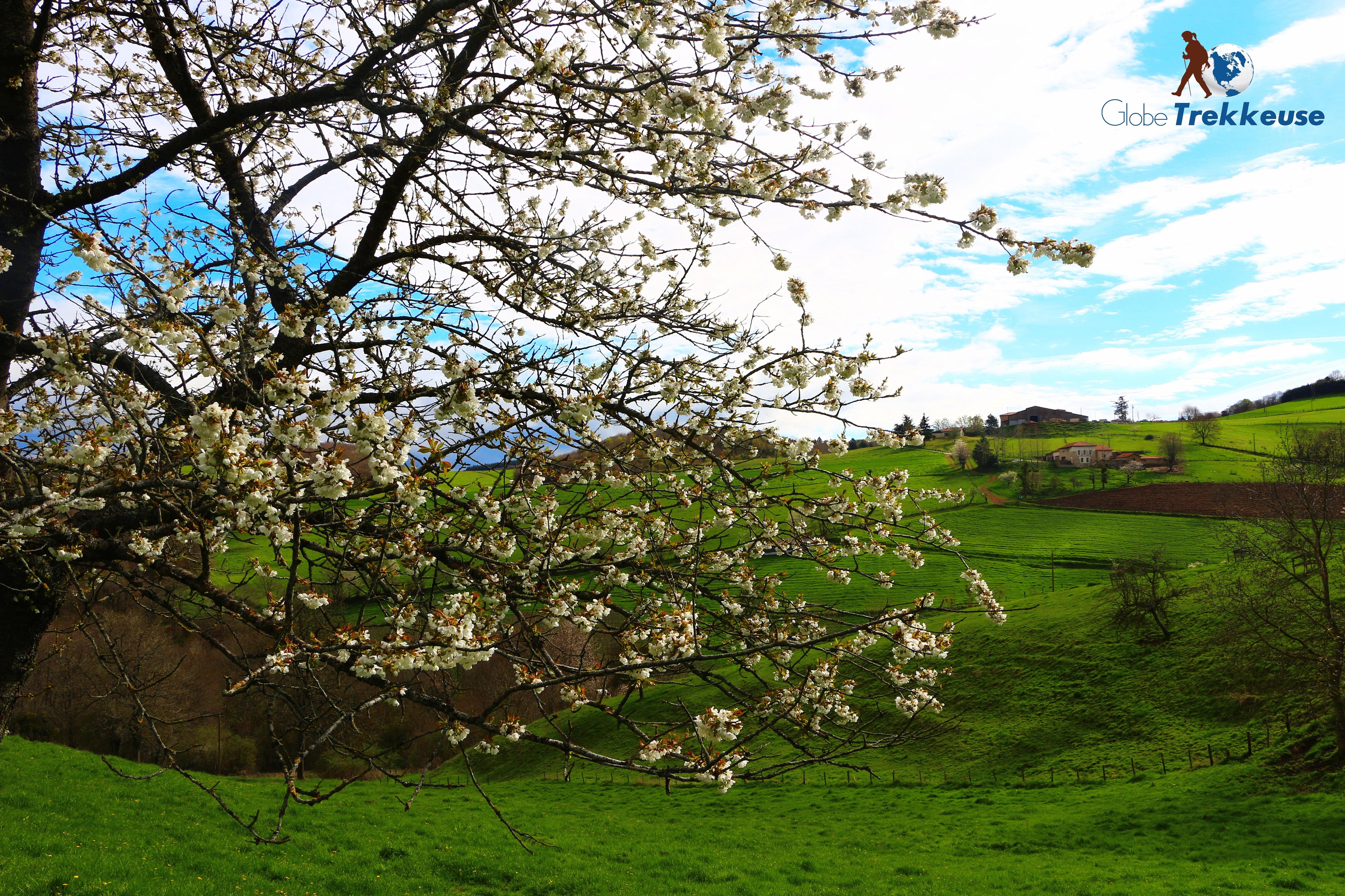 randonnée autour de lyon monts lyonnais fleurs