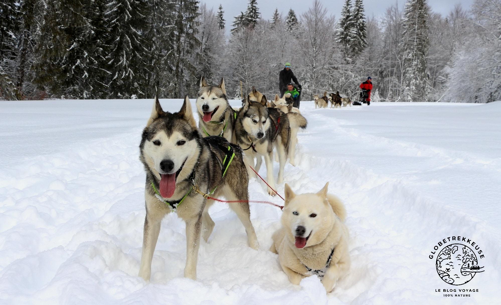 jura en famille hiver chiens