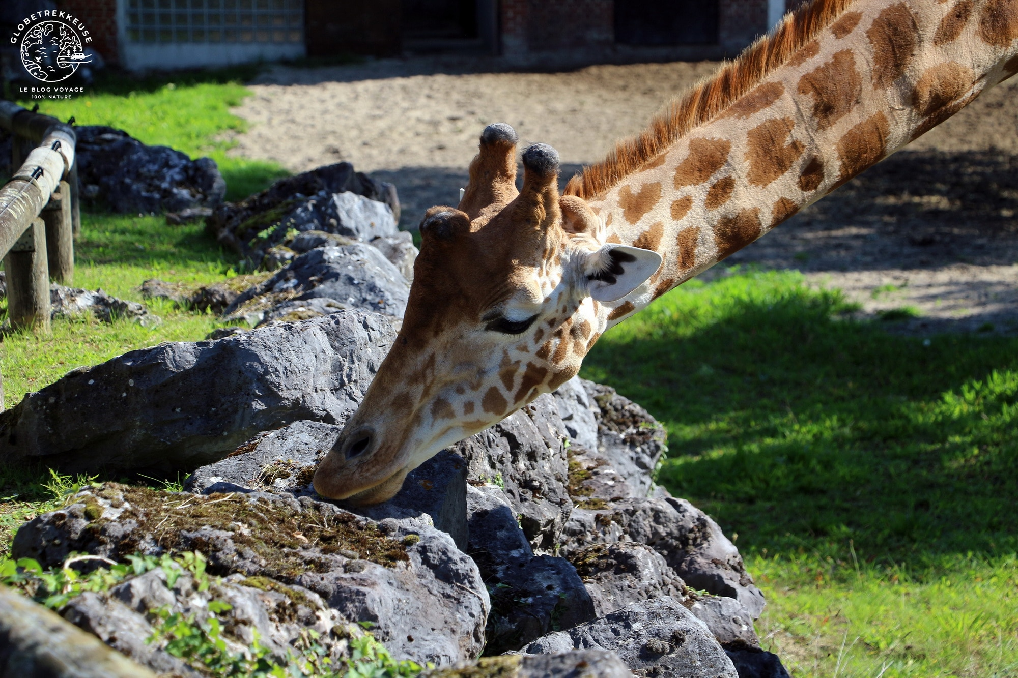 hauts-de-france maubeuge zoo