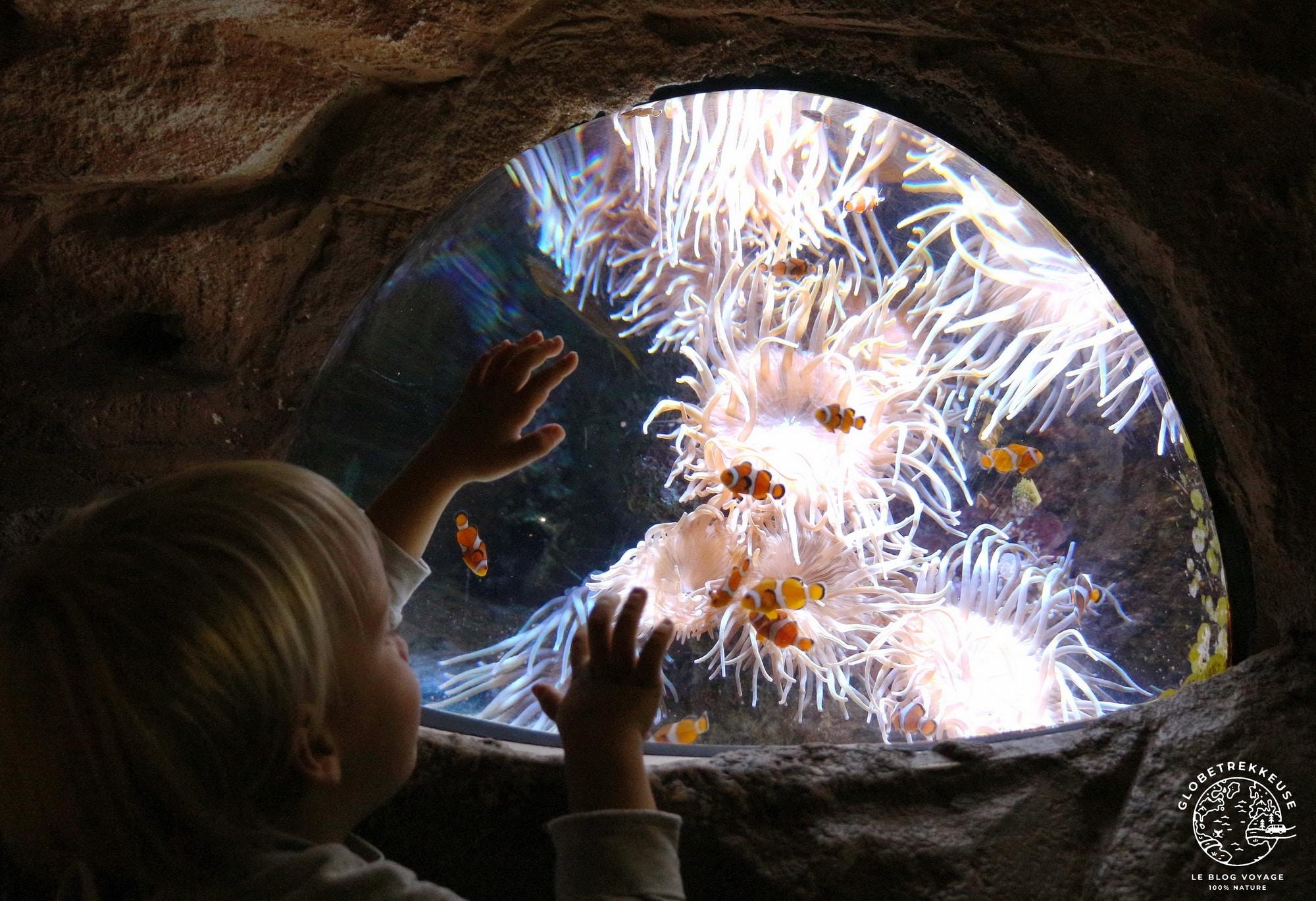 3 jours au pays basque aquarium
