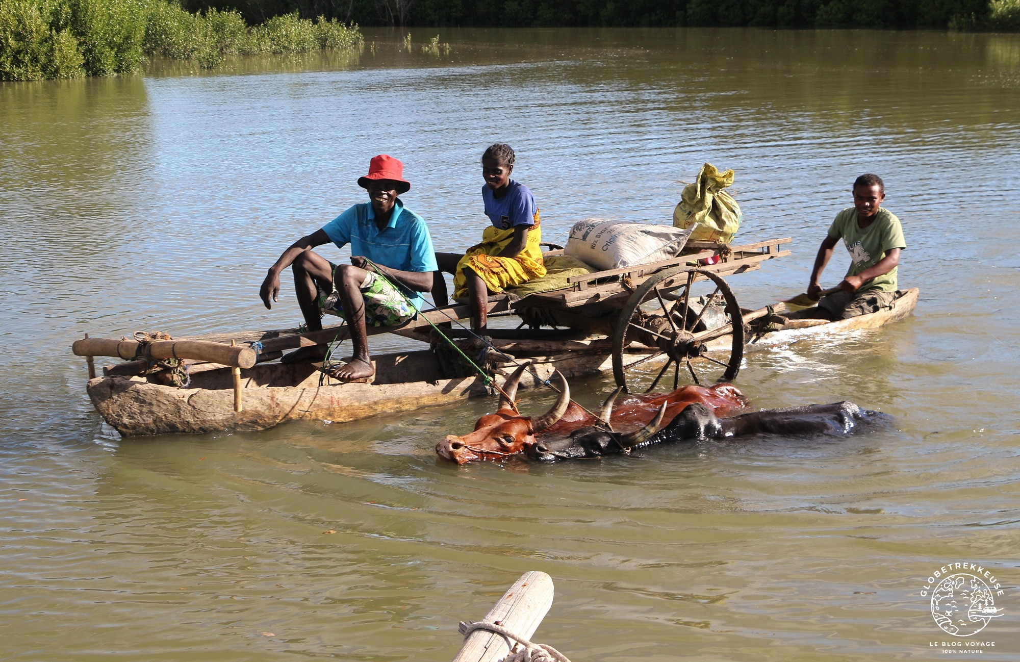 tourisme responsable madagascar zebu