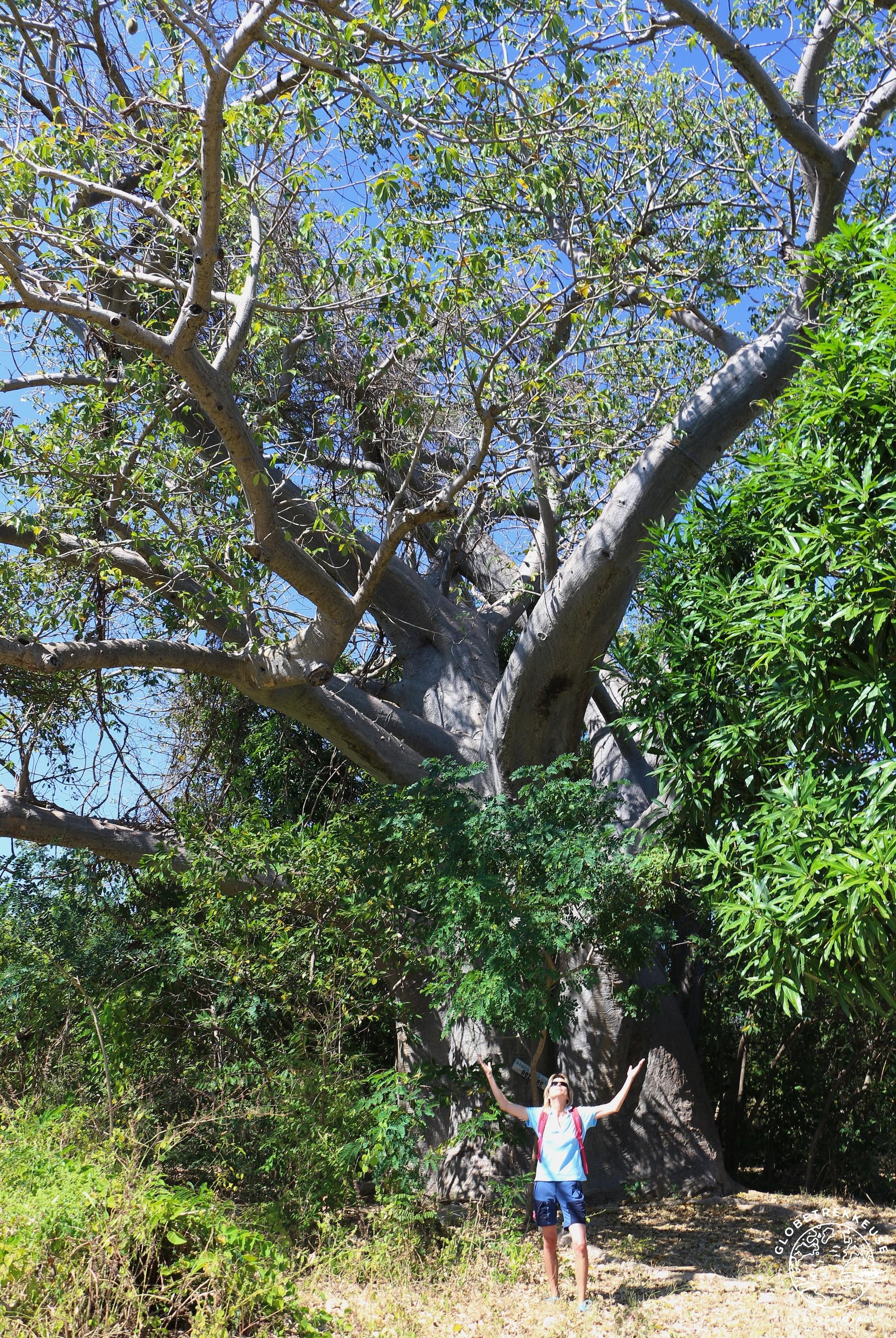 tourisme responsable madagascar baobab
