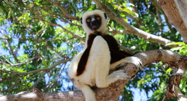 Tourisme responsable à Madagascar, sous le charme de Majunga…