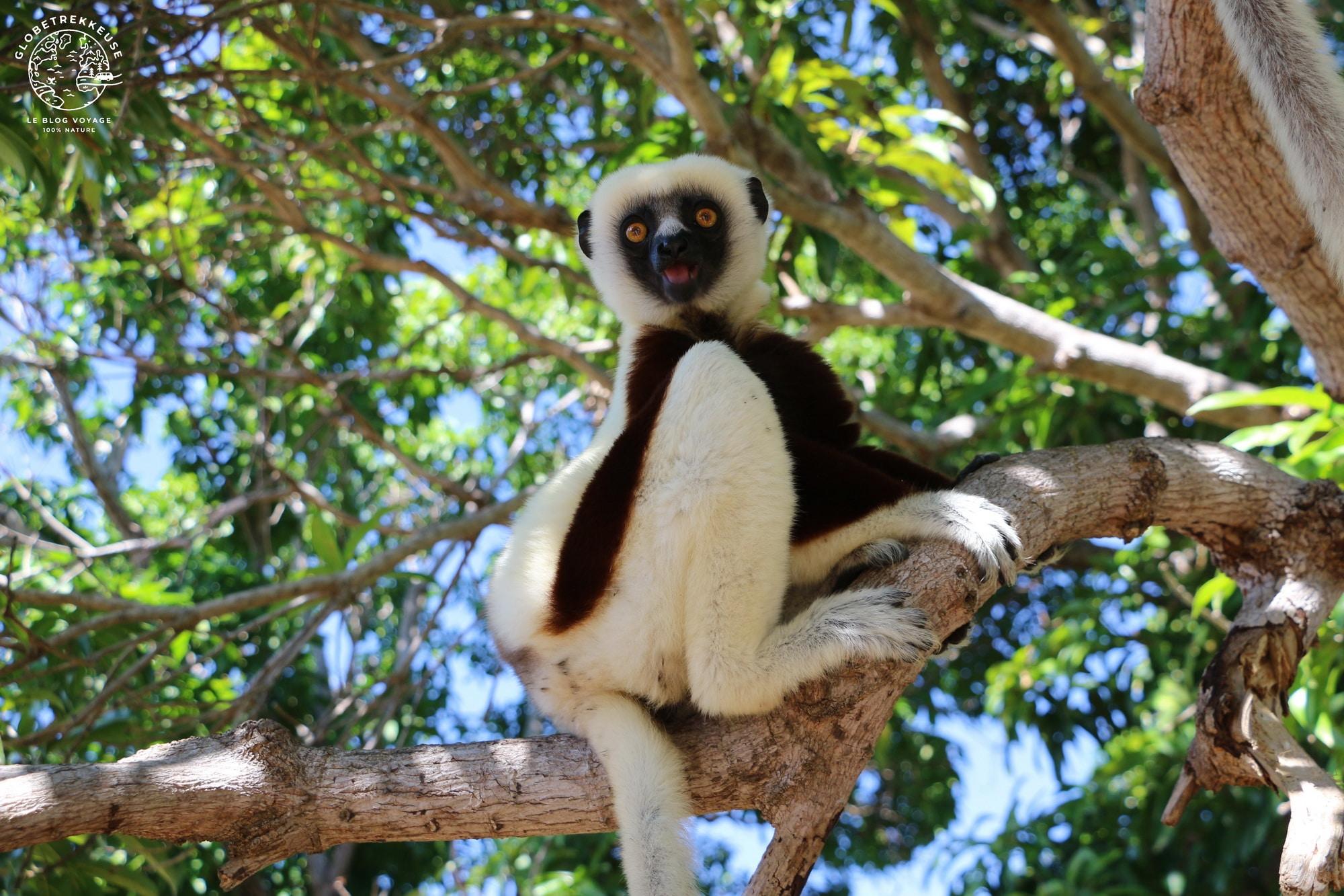 tourisme responsable madagascar lemurien