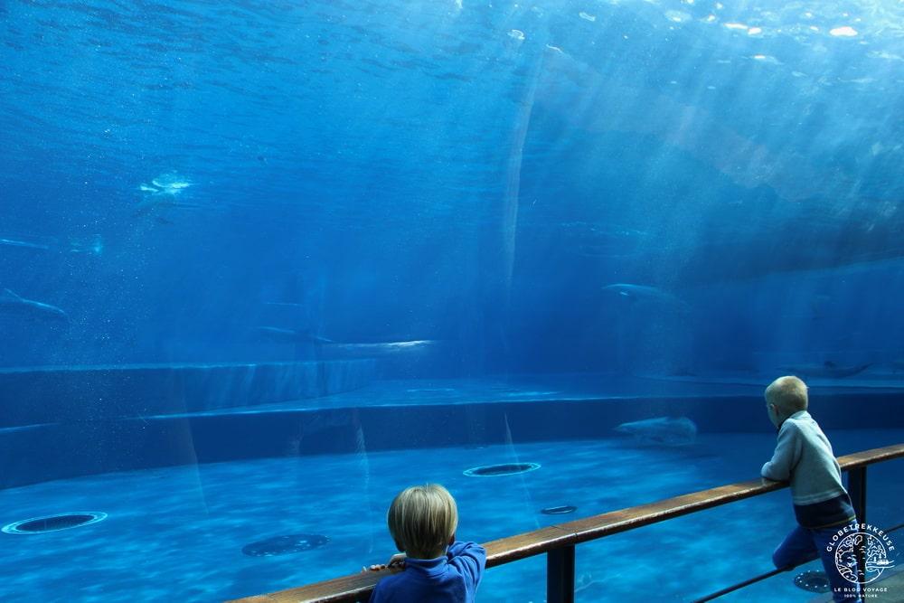aquarium de genes enfants dauphins