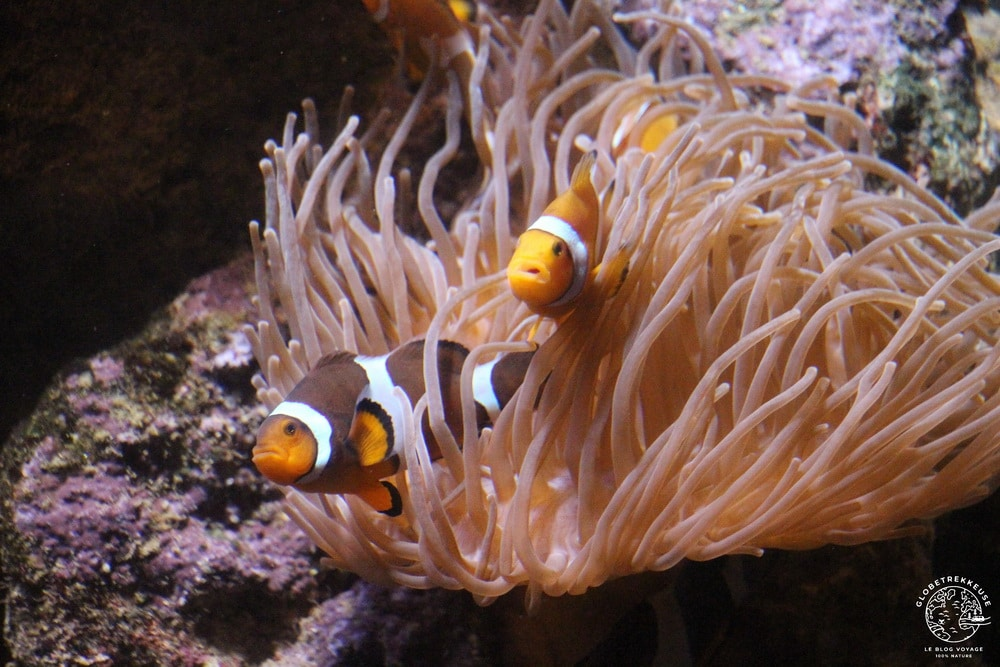 aquarium de genes enfants nemo