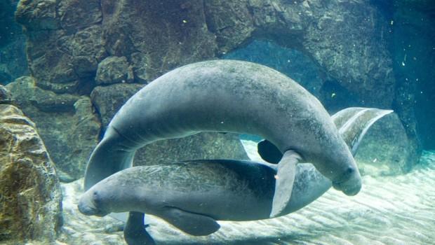 Aquarium de Gênes avec enfants, entre émerveillement et questionnement…