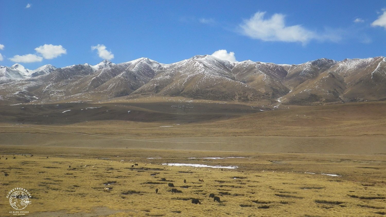 voyage en train tibet globetrekkeuse