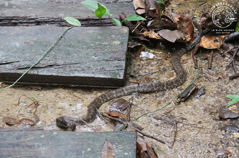 bagne des annamites serpent