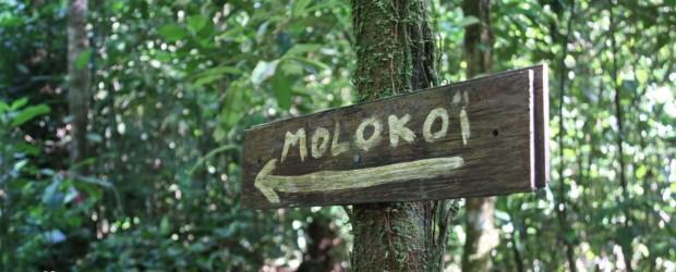 Sentier du Molokoï, le plus long itinéraire de randonnée de Guyane !