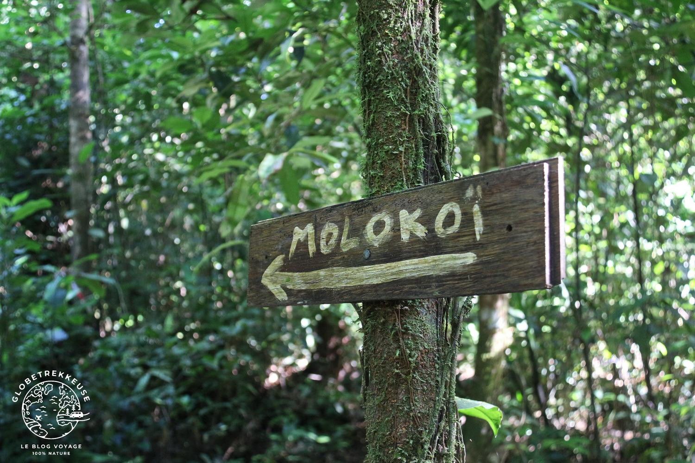 sentier du molokoi guyane