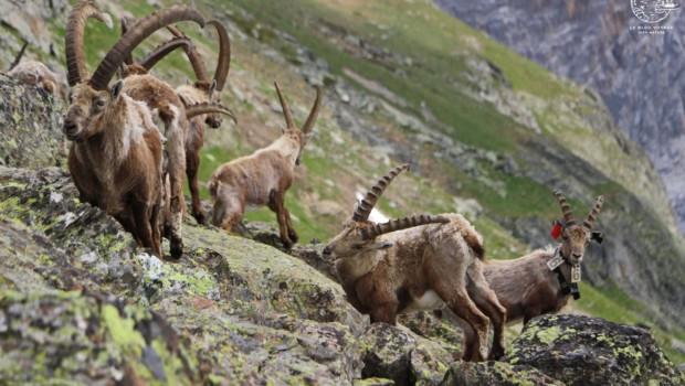 Tour des Glaciers de la Vanoise, la plus belle randonnée des Alpes ?