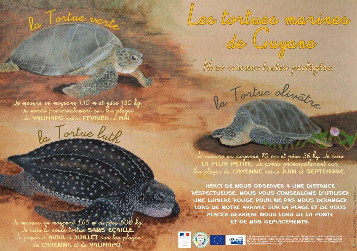 tortues marines de guyane rtmg