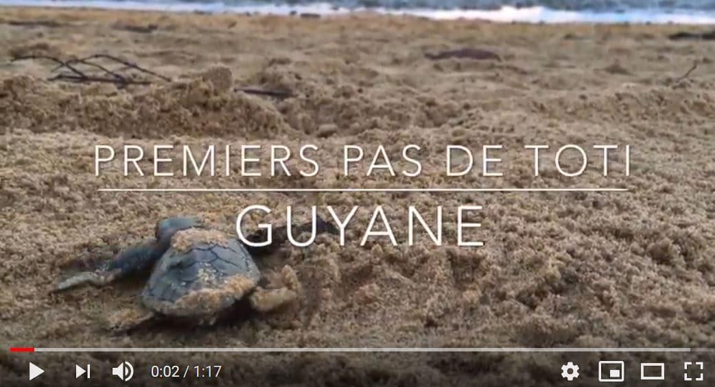 tortue marine premiers pas