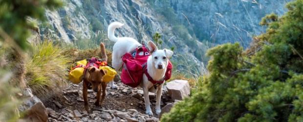 Tour du Monde avec chiens au départ de la Guyane