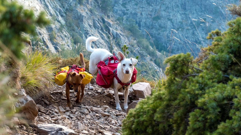 tour du monde avec chiens 2021