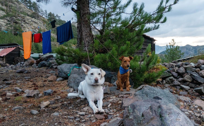 tour du monde avec chiens projet