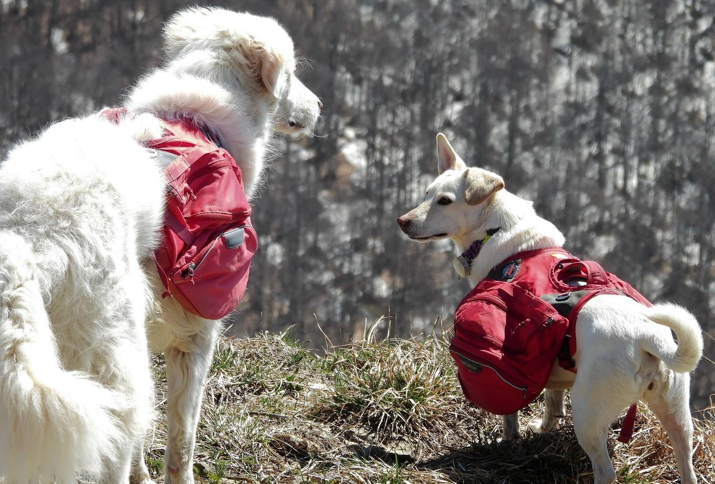 tour du monde avec trois chiens