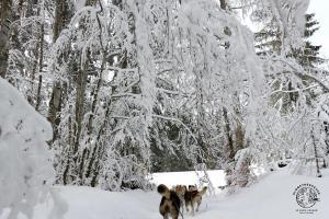 jura-en-famille-hiver-chiens-traineaux-2