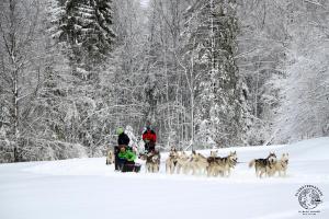jura-en-famille-hiver-chiens-traineaux