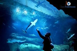 paris-en-famille-cineaqua-requins