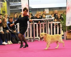 paris-en-famille-salon-agriculture-chiens