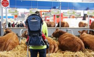 paris-en-famille-salon-agriculture-vaches