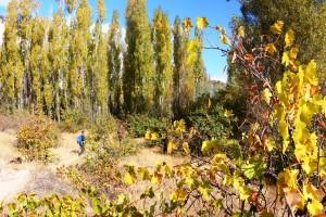 randonnee-en-cappadoce-jardins-godema